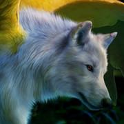 Rock Wolf on My World.
