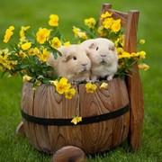Медведь - on My World.